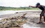 A ideia inicial dele era fotografar crocodilos com drones, uma vez que o local é famoso pela presença de répteis dos grandes. Mas, pesquisas na internet revelaram a existência de Guido e sua estranha capacidade de alimentar os animais. E aí surgiu uma nova estrelaNÃO VÁ EMBORA:Turista se livra de ataque de urso assassino com golpes de canivete
