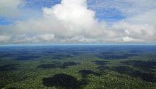 Amazônia será destruída até 2064, prevê cientista