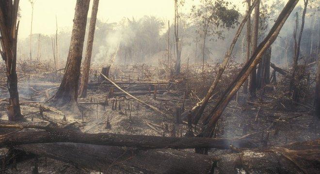 Redução no desmatamento, como este na Amazônia, é uma das medidas urgentes indicadas pelos cientistas