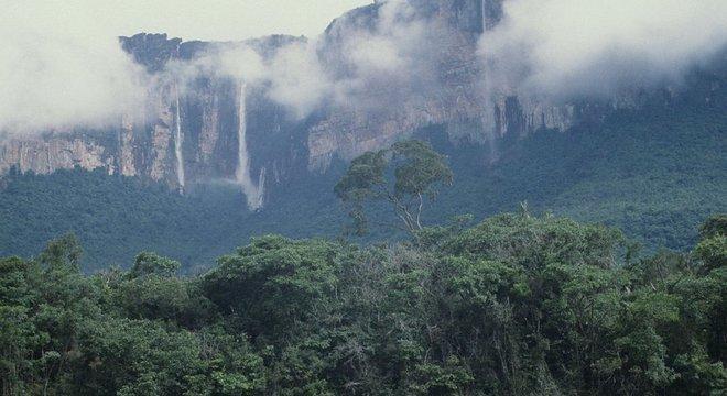 Tecnologia a laser do Inpe ajudou os pesquisadores a identificar a área onde estão as árvores mais altas da floresta