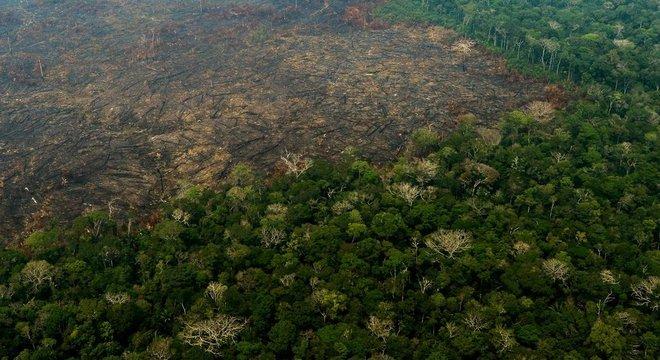 Desde 2017, o projeto Amazônia Protege já moveu 2.539 ações judiciais de danos ambientais, mas nenhum teve condenações definitivas