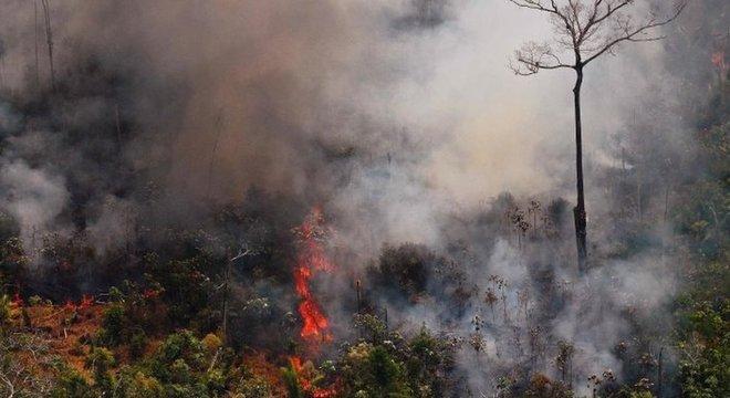 Aumento de mais de 80% nos incêndios este ano foi amplamente noticiado