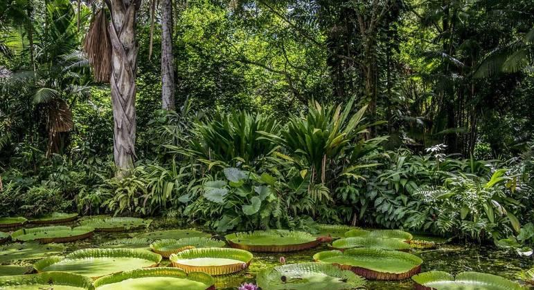 Projeto quer plantar novas árvores para reestruturar florestas brasileiras