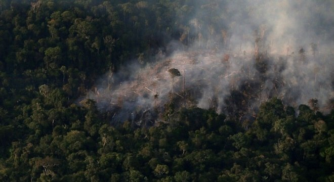 Amazônia está sofrendo com desmatamento