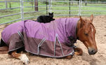 Jennifer relatou que, automaticamente, Champy assumiu uma postura protetora para com o gato, cuidando dele