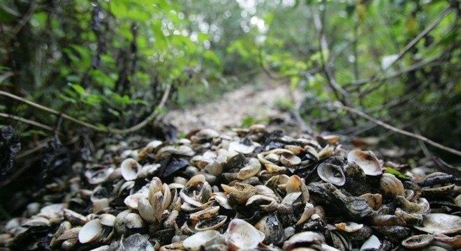 Amontoados de conchas