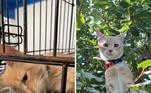 Este gatinho foi resgatado momentos antes de ser sacrificado. Pela carinha, é notável que ele já imaginava qual seria seu destino naquele dia. Mas tudo mudou e hoje ele está lindo e saudável.