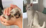 A diferença entre a primeira e a segunda foto é de apenas um ano!