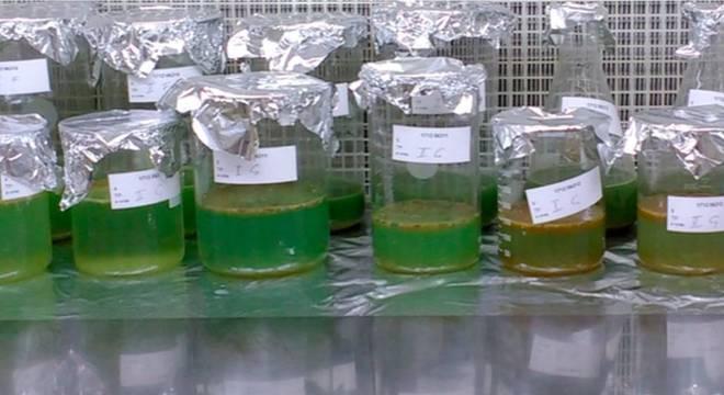 Análises realizadas em amostras de fezes humanas apontaram a presença de microplásticos de até nove tipos diferentes