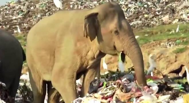 As imagens chocaram ambientalistas