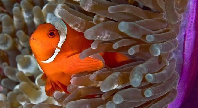 Anêmona-do-mar – O que é e quais as suas principais características