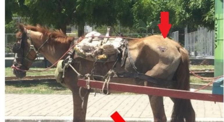 Animais carroça