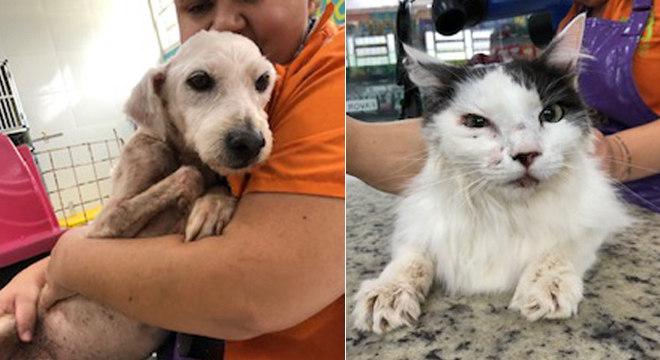 Cães e gatos recebem atendimento após canil ser atingido pelas chuvas