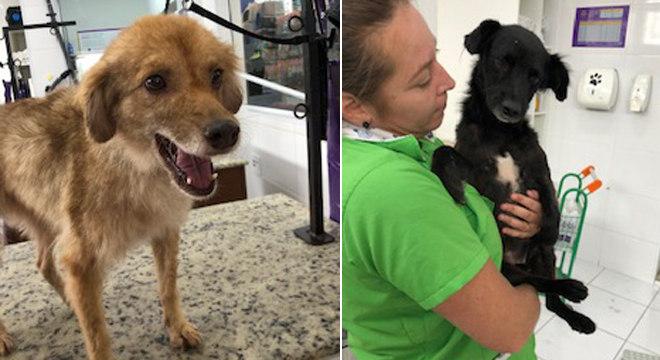 Os animais foram atendidos em uma clínica da cidade