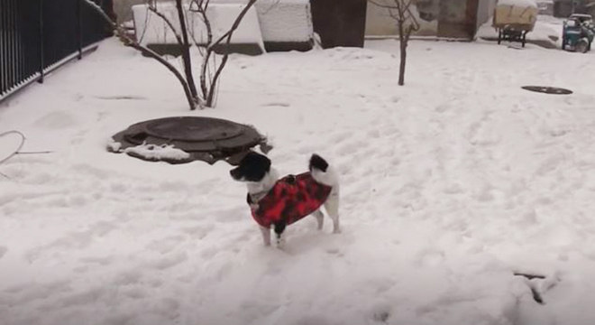 População de Wuhan abandona cães e gatos por medo de contágio