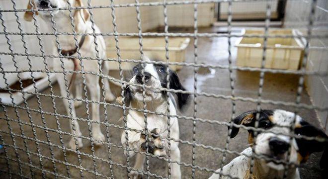 O Senado deve votar que aumenta a pena para maus-tratos de animais