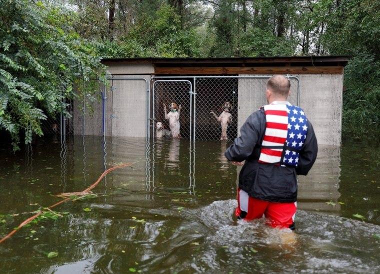 Homem salva cães abandonados durante furacão Florence