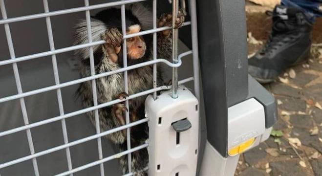 Policiais encontraram sagui entre os animais mantidos precariamente