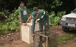 OZooUnama, localizado em Santarém, no Pará, tem um belo histórico de devolução de animais silvestres à natureza. Só nos últimos quatro anos, 500 bichos retornaram ao habitat natural deles após receberem todos os cuidados dos profissionais do instituto
