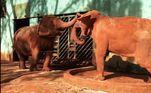 Antes de ir para o Bosque, o animal havia sido resgatado em um circo e, segundo Luisa, em vez de ter uma vida melhor,