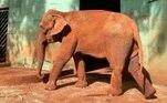 A elefanta Bambi vivia noBosque Municipal Fábio Barreto, em Ribeirão Preto, mas, após uma série de denúncias de possíveis maus-tratos, endossada pela ativista Luisa Mell, a justiça determinou, em agosto deste ano, que ela fosse transferida para o Santuário de Elefantes