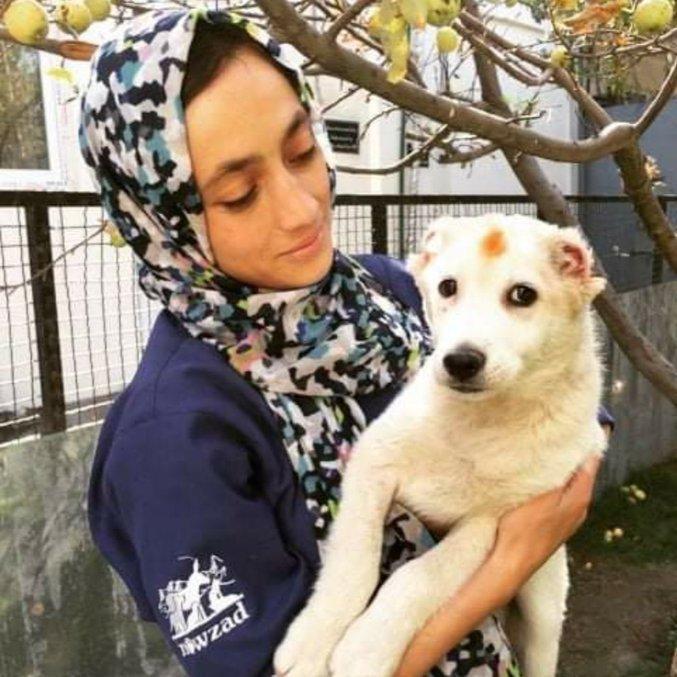 Cão resgatado por Ong em Cabul, capital do Afeganistão