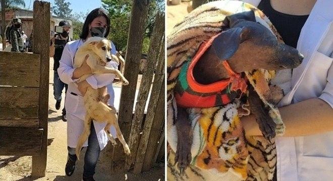 No local a Polícia Ambiental apreendeu 83 animais, sendo 75 cães e oito gatos