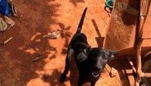 Polícia resgata 14 animais vítimas de maus-tratos na Grande BH