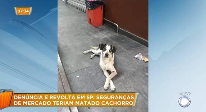 Cachorro que morreu causou comoção nas redes sociais