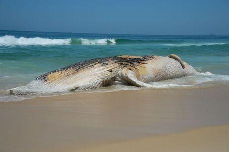 Pesca fantasma ameaça animais