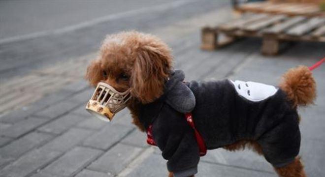 Animal, no entanto, não apresenta nenhum sintoma da enfermidade e ainda não é possível esclarecer se o vírus do cão pode infectar humanos