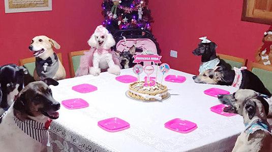 Cachorra ganha festa de 15 anos e comemora ao lado dos irmãos (Arquivo Pessoal)