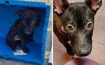 Muitos cães abandonados chegam nos abrigos desnutridosVeja também:Resgatada em estado terminal, cadela curte últimos dias de vida