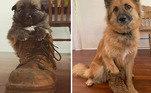 Alguém está precisando de um sapato maior