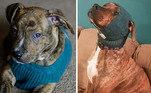 Adaptando os looks de invernoLeia mais:Cachorro idoso é adotado após 14 anos em abrigo