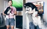 Mais uma família 'enganada'Veja também:Pequenos gigantes! 7 cães que não têm noção do próprio tamanho