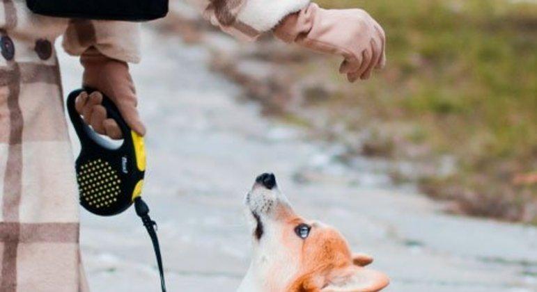 Apesar de óbvio, é preciso destacar que não se deve castigar fisicamente os animais. Isso causa estresse, provoca falta de atenção e também prejudica o vínculo com o tutor.