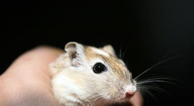 Apesar do avanço, o estudo ainda requer acompanhamento a longo prazo dos animais em que a vacina foi testada para confirmar a imunização