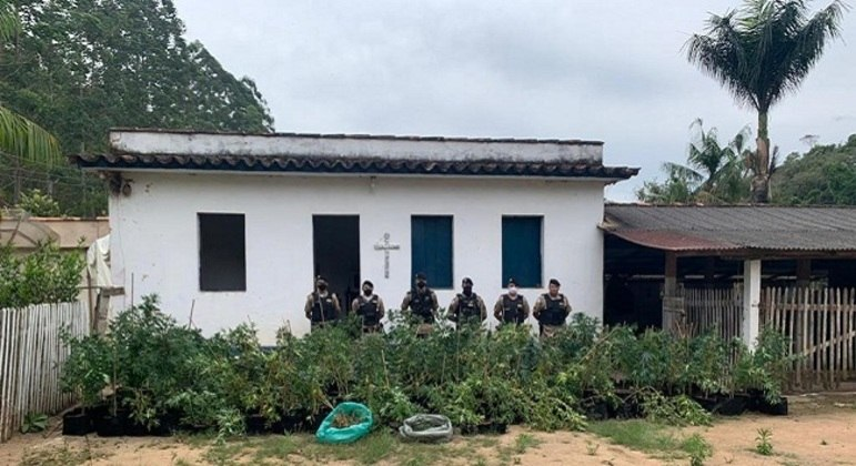 Militares participaram de operação que apreendeu plantas de maconha