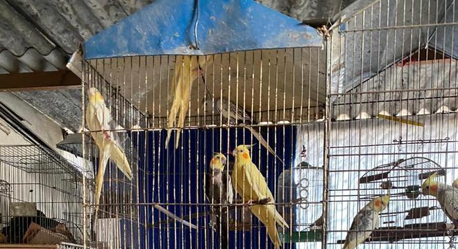 Foram encontradas 40 aves no local