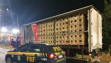 PRF apreende mais de 10 mil garrafas de cachaça em Vargem (SP)