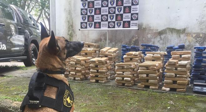 O pastor belga da Polícia Civil ajudou na busca e localizou as drogas