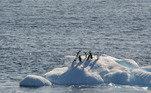 Aquecimento global antártida pinguins geleiras