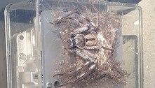 Aranha é flagrada sobre medidor de energia com centenas de filhotes