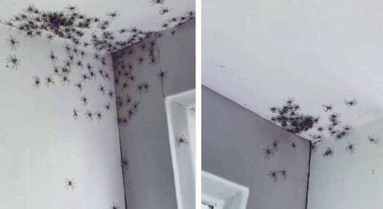 Um exército de aranhas caminhou no quarto de uma australiana