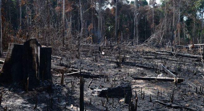 Juíza federal quer explicações sobre alta do desmatamento na região amazônica