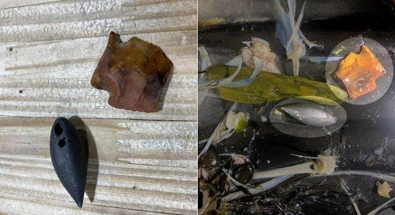 Artefatos de pedra milenares foram identificados em estômago de jacaré-norte-americano
