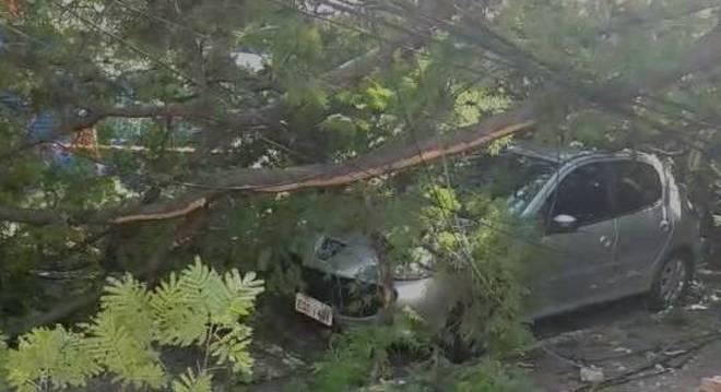 Árvore de grande porte caiu em pátio de escola e atingiu carros em São Paulo