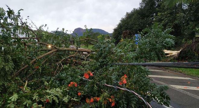 Rajadas de vento em Santa Catarina podem variar entre 60 e 100 km/h