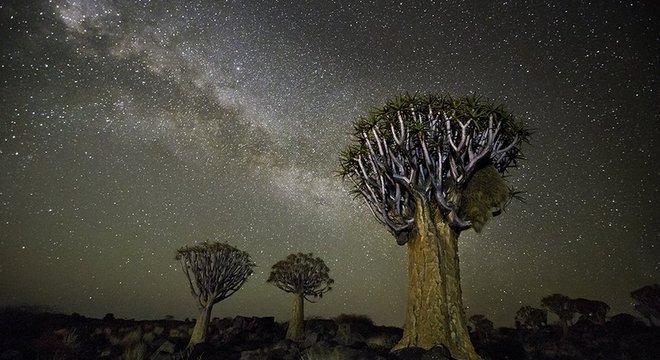 Na África, Moon escolheu fotografar árvores em meio às estrelas após estudar sobre a influência do cosmos no crescimento destas plantas